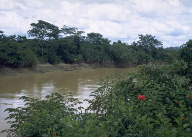 Rain Forest 9